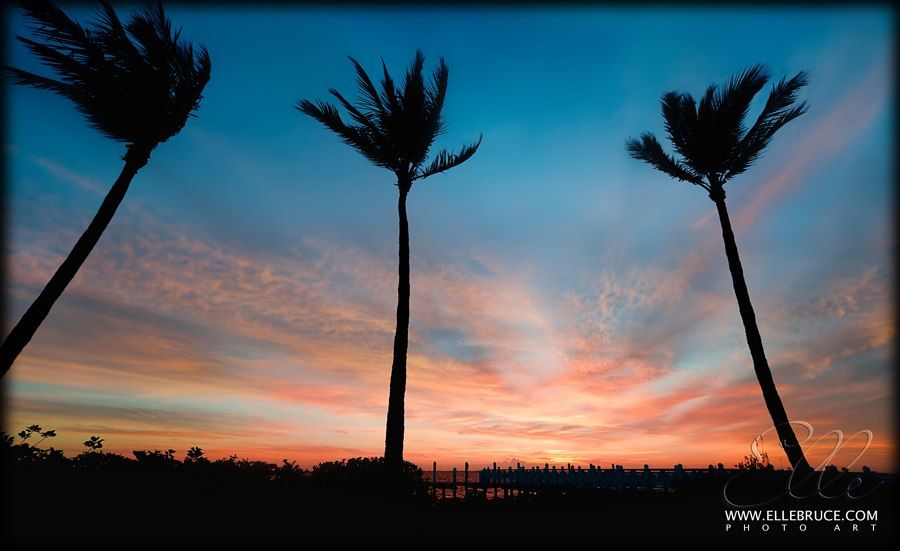 #palm trees sway in the gentle breeze of a pink #sunrise on Captiva.