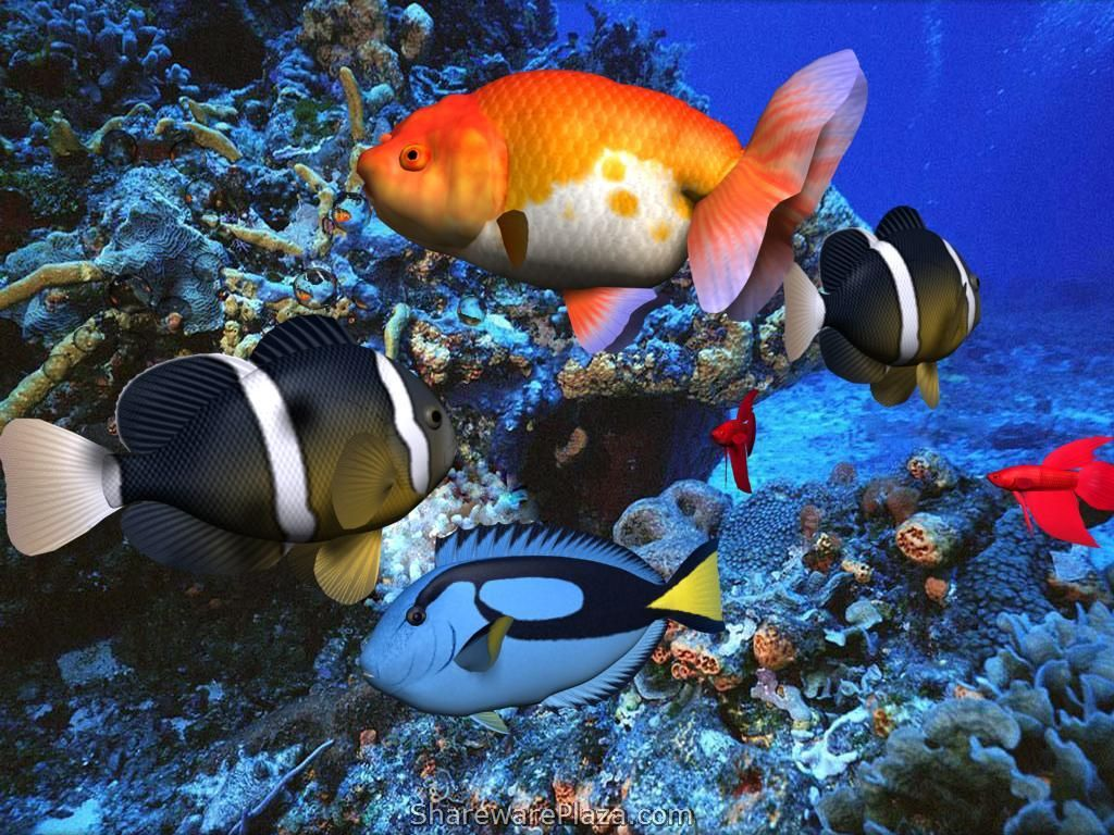 Beautiful 3d Underwater Scene Wallpapers Animated Screensavers Fish Wallpaper Free Moving Wallpapers