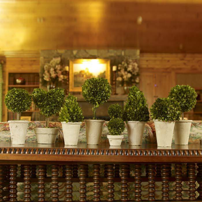 8 Piece Preserved Boxwood Topiary Set