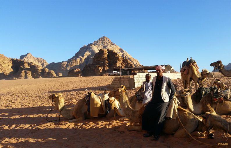 Camellos en Wadi Rum. Jordania