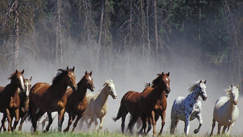 Argentina - Prohibition of slaughter and sale of horsemeat.