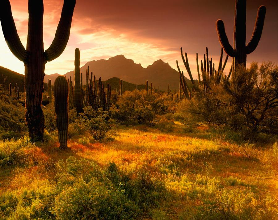 Lower Sonoran Sunrise Wallpaper Mural (With images