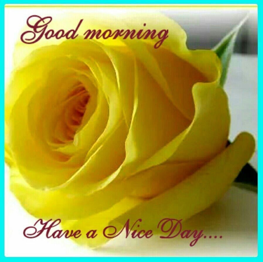 Good Morning Have A Nice Day Yellow Roses Rose Beautiful Roses