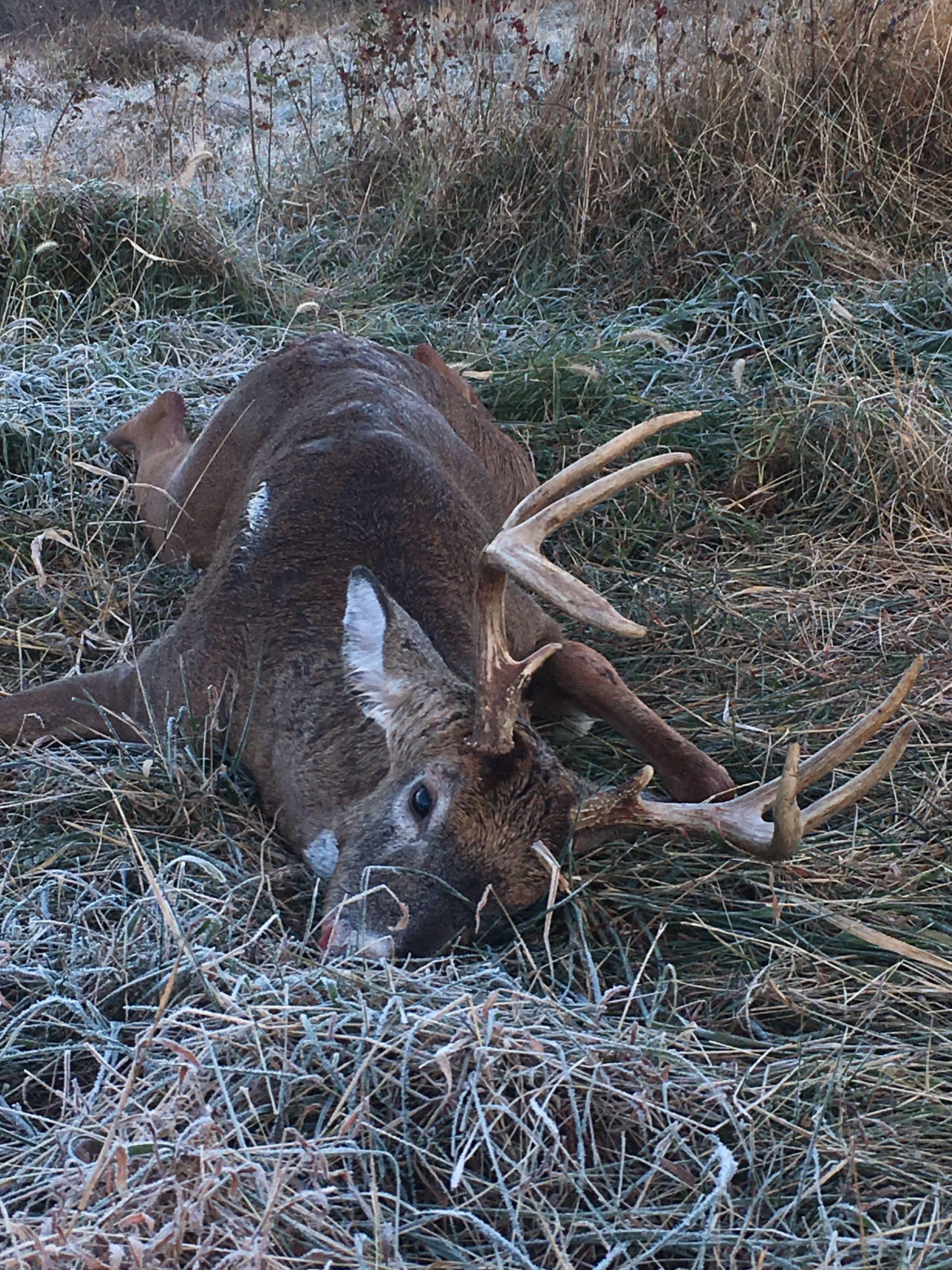 My Hunting & Fishing image by Adam Deer hunting