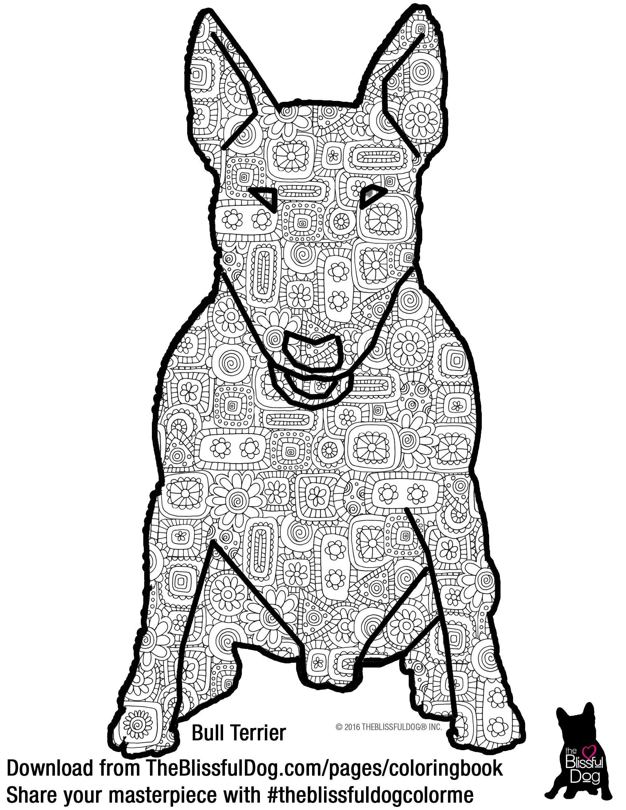 and here is the bull terrier coloring book page hi rez file fyi