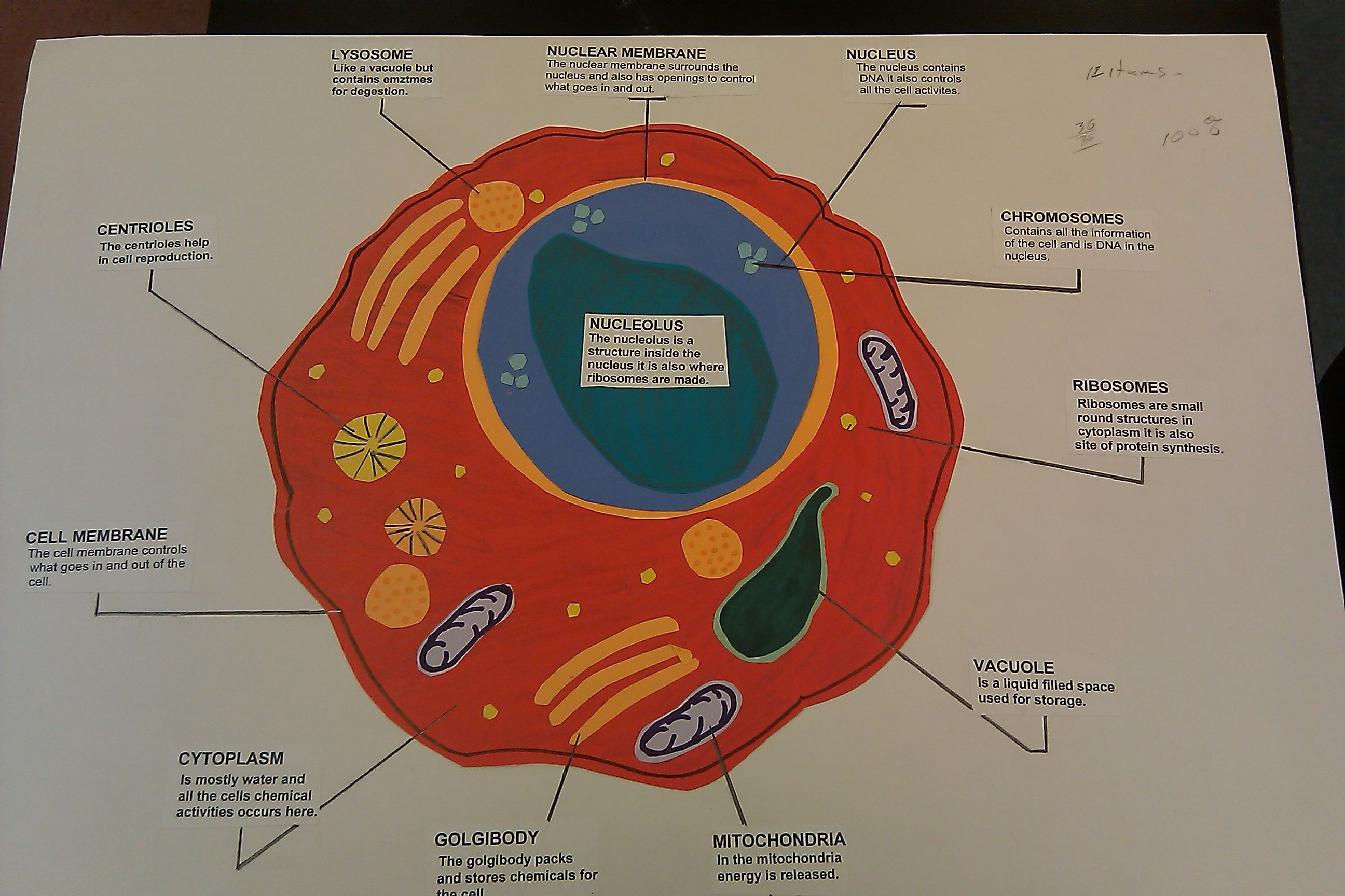 Cell structure and function poster ideas google search 7th grade cell structure and function poster ideas google search ccuart Images