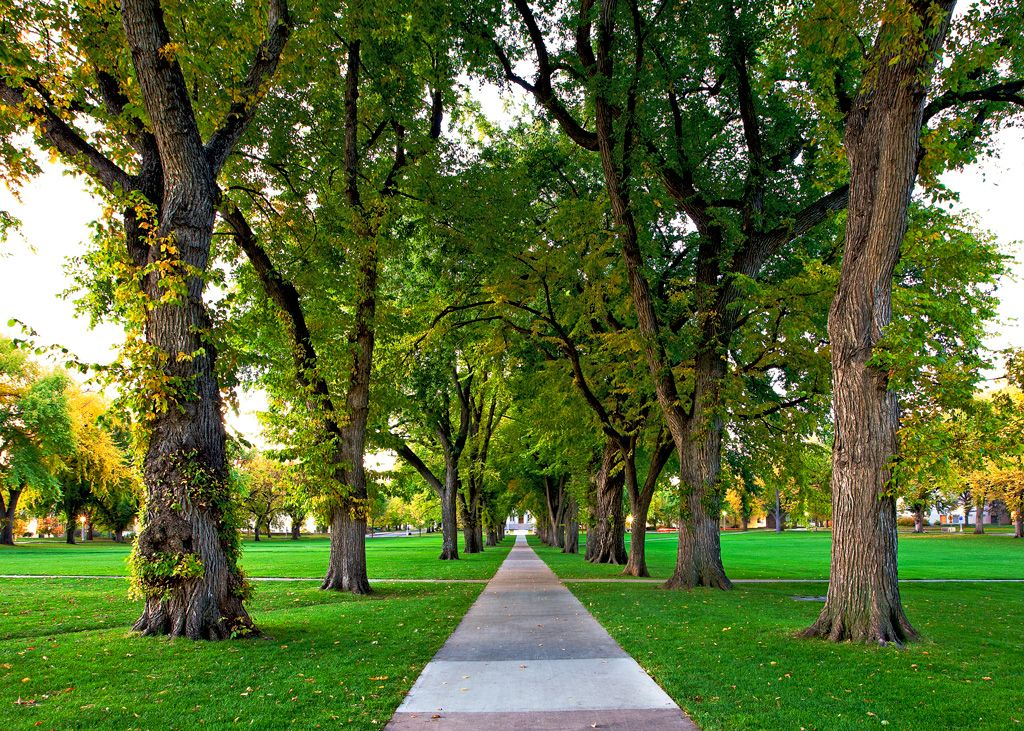 The oval fort collins a day to dream about small - Olive garden fort collins colorado ...