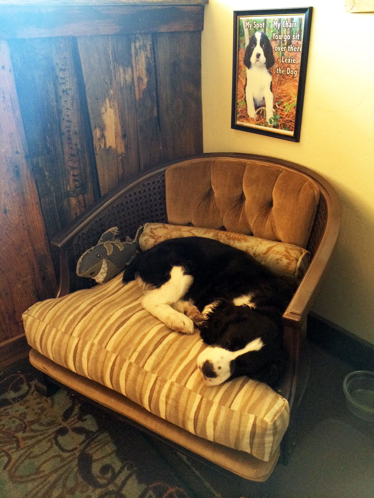 Diy dog bed chair lexie english springer spaniel puppy