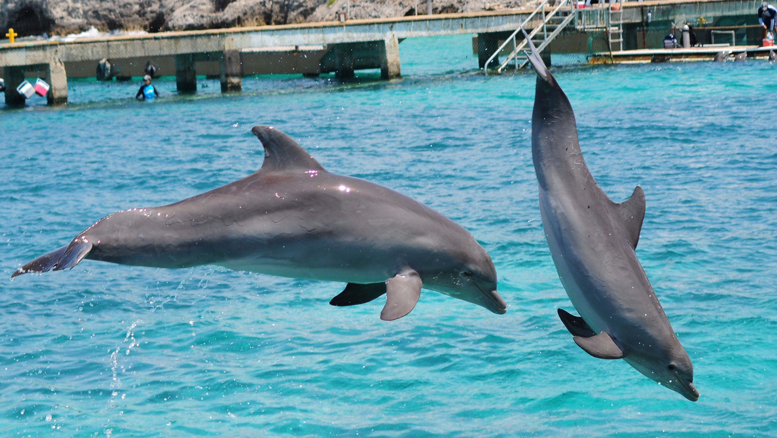 Dolphins at Isla Mujeres, Cancun
