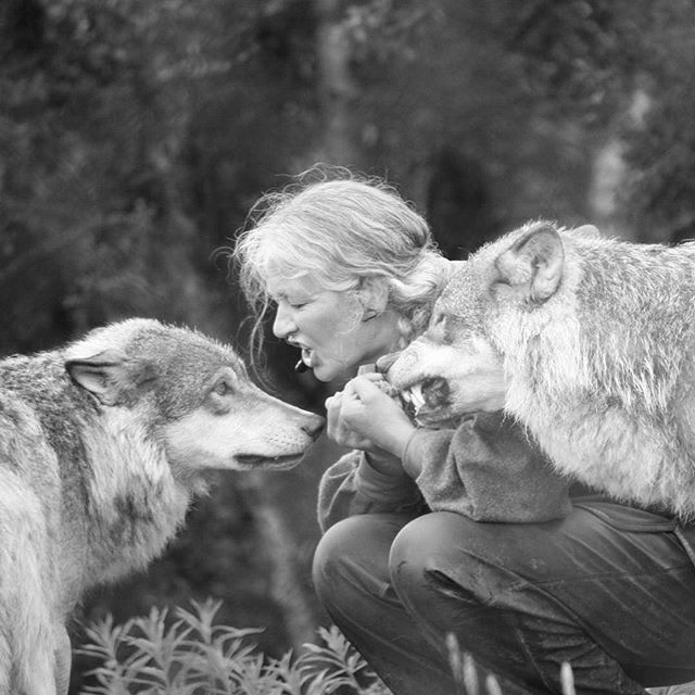 """There is a wolf in me…fangs pointed for tearing gashes…a red tongue for raw meat…and the hot lapping of blood. I keep this wolf because the wilderness gave it to me, and the wilderness will not let it go."" ~Carl Sandburg  #carlsandberg #poet #howlforyourlife"