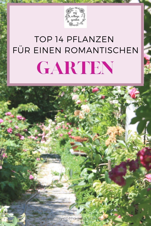 14 Lieblinge Die Einen Cottage Garten Zaubern Ohne Arbeit Pflanzen Cottage Garten Pflegeleichte Pflanzen