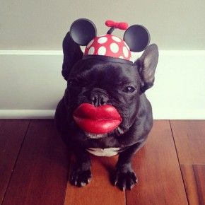 Dog Named Trotter 15 Mc Winkels Weblog Susse Hundebilder Franzosische Bulldoggenbabys Hund Funnies