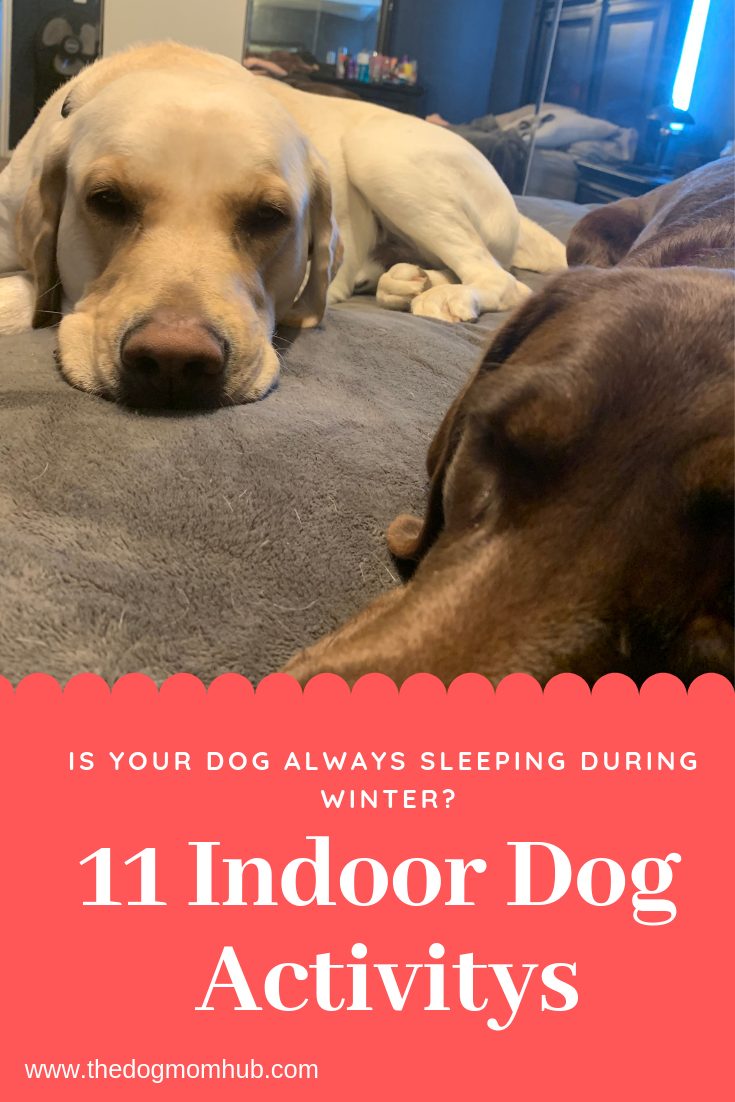 11 Indoor Dog Activity S Dog Activities Indoor Dog Dogs