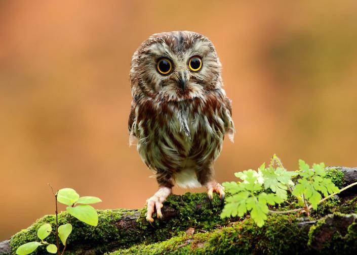 Itsy Bitsy Baby Owl....Precious.
