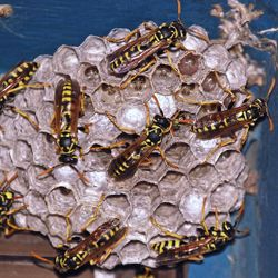 How To Get Rid Of Wasps In A Stone Wall