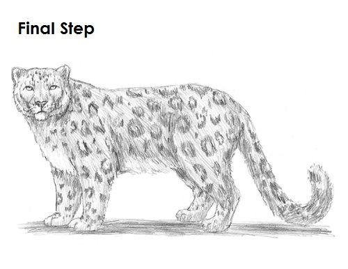 Drawn Cheetah Snow Leopard 2 Snow Leopard Drawing Leopard Drawing