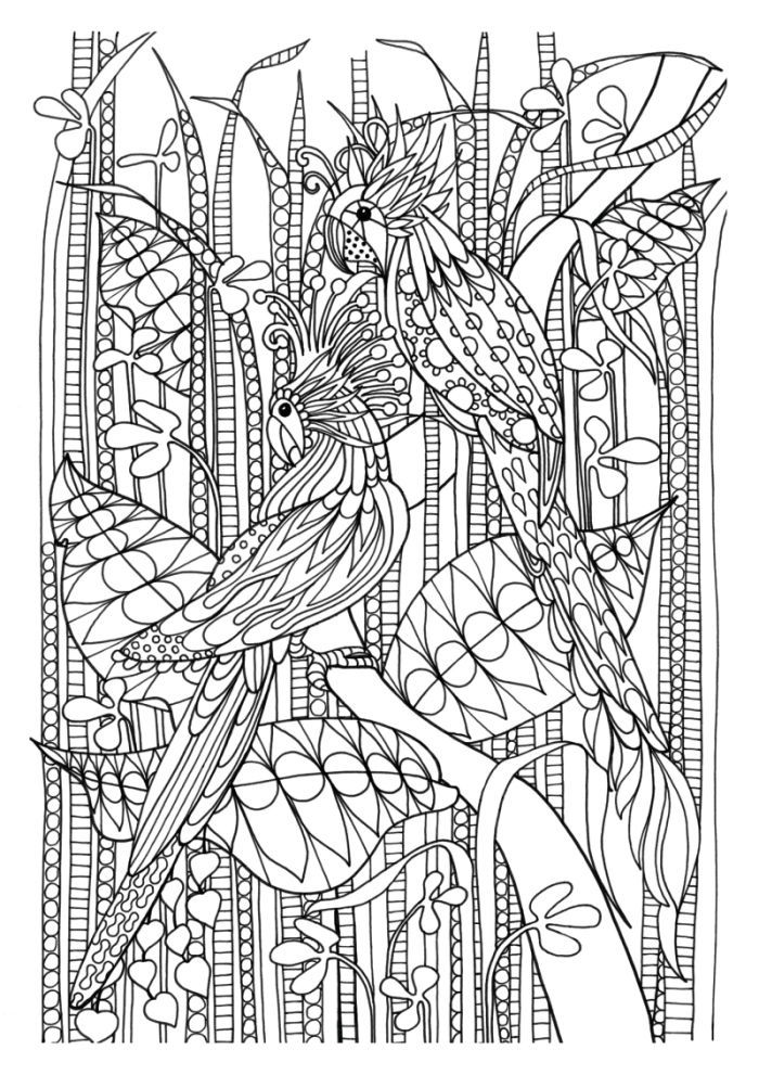 Chellie Carroll - Tropical Birds coloring page | Zentangle Coloring ...