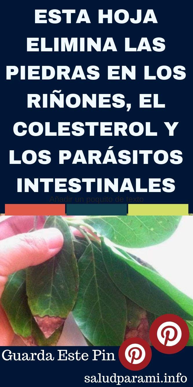Para Que Perder El Tiempo Cuando Esto Elimina Las Piedras En Los Riñones El Colesterol Y Los Parásitos Intestinales Salud Para Mi Plant Leaves Plants Heath