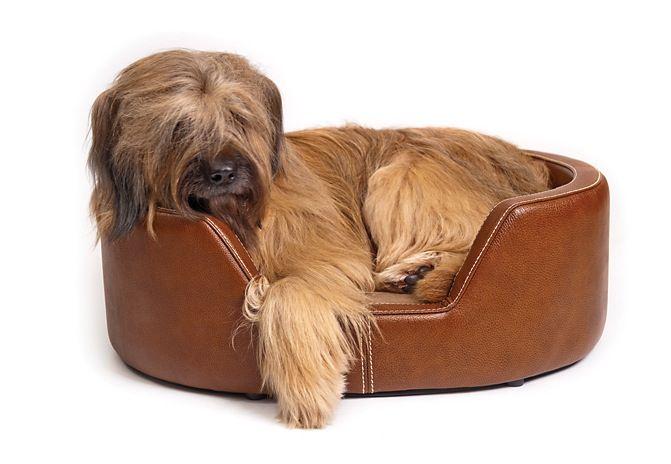 Waifs Strays Luxury Pet Products Luxury Pet Leather Dog Bed Luxury Dog