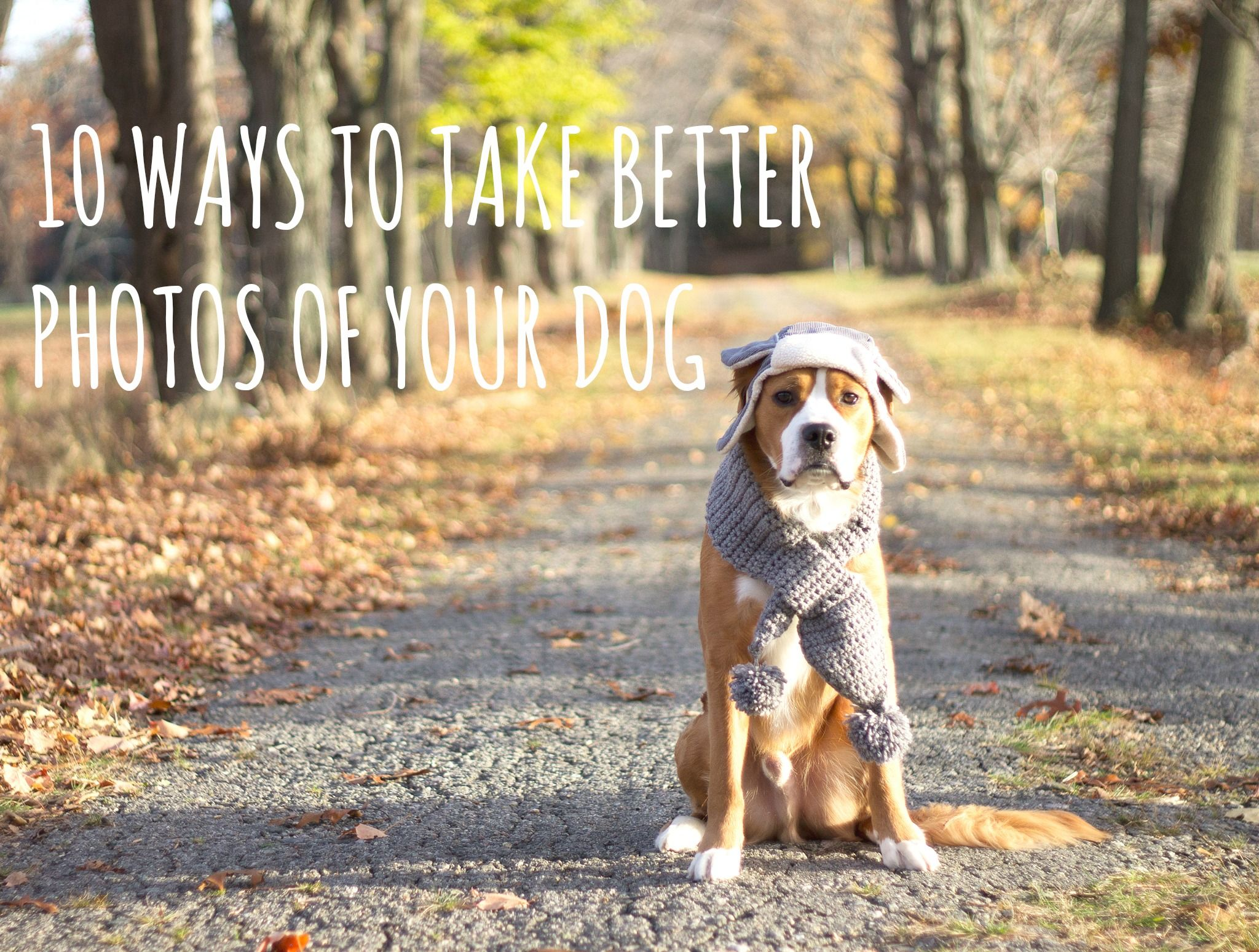 How to Take Better Animal Rescue Photos