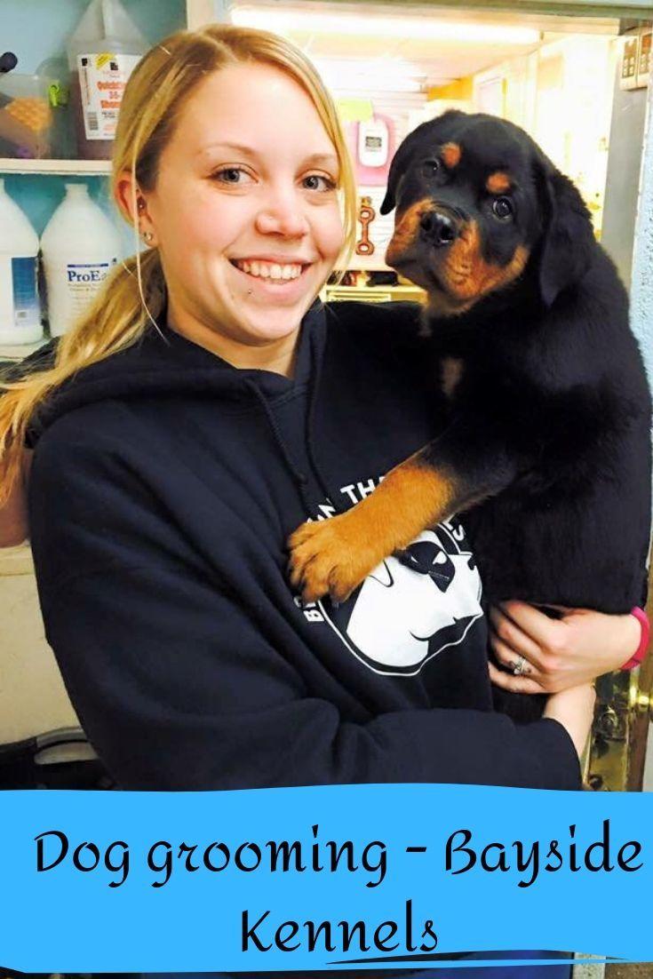 Dog grooming in Virginia Beach Bayside Kennels Dog