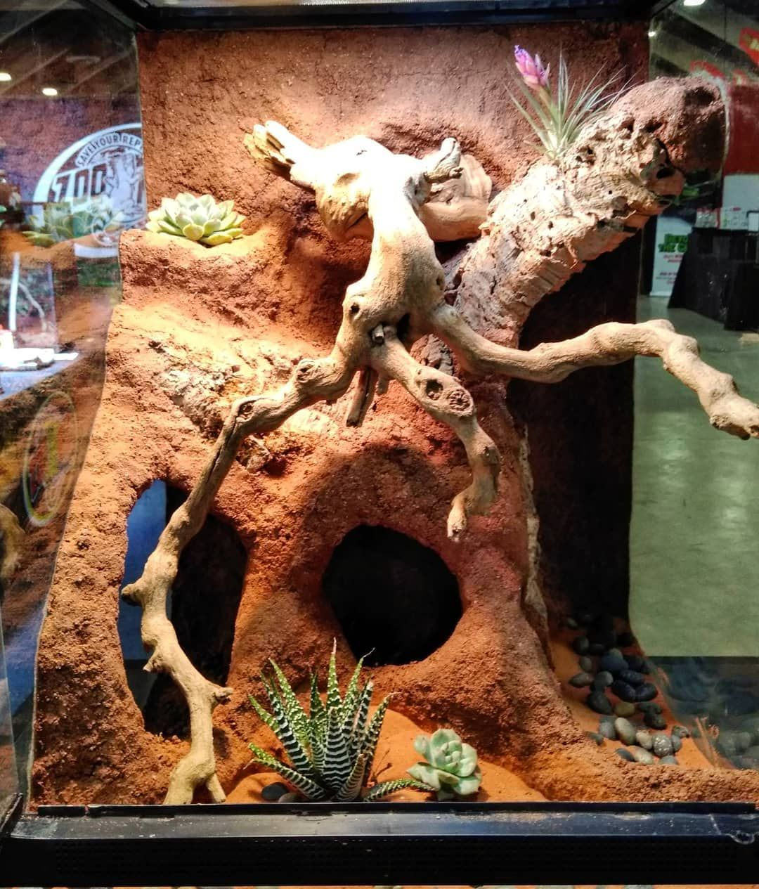 18 Quot X18 Quot X24 Quot Desert Terrarium By Zoo Med Geckos