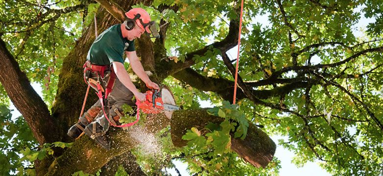 Pin on Tree Removal Mandeville