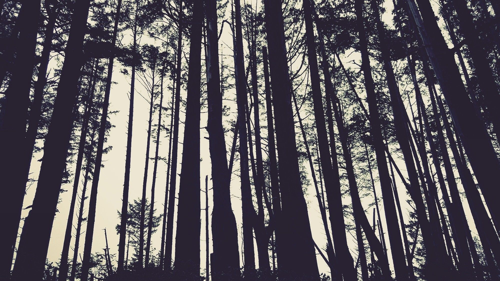 Hoh Rainforest Thespectrumworkshopcom