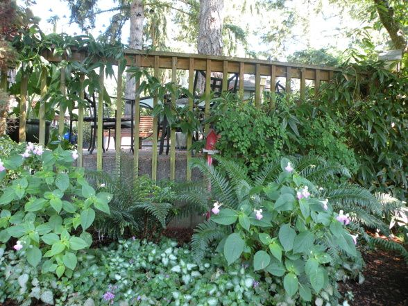 Shady Area With Lamium Ferns Poor Man S Orchids Evergreen Clematis Cottage Garden Fall Cottage Heather Gardens