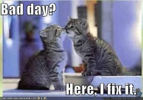 Image Result For How To Cheer Someone Up After A Bad Day Cat Birthday Funny Cat Love Cheer Someone Up