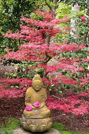 Japanese garden at Lotusland