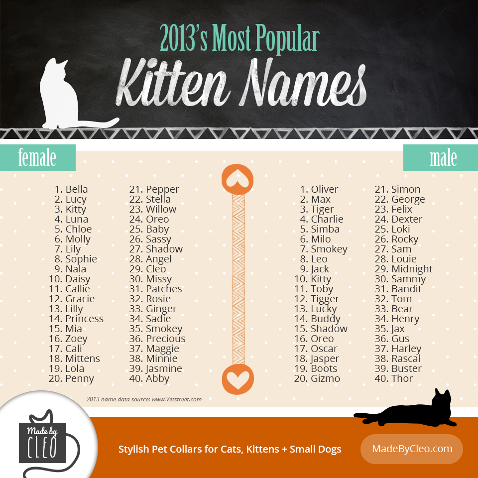 Infographic Most Popular Kitten Names / 2013. Shows top