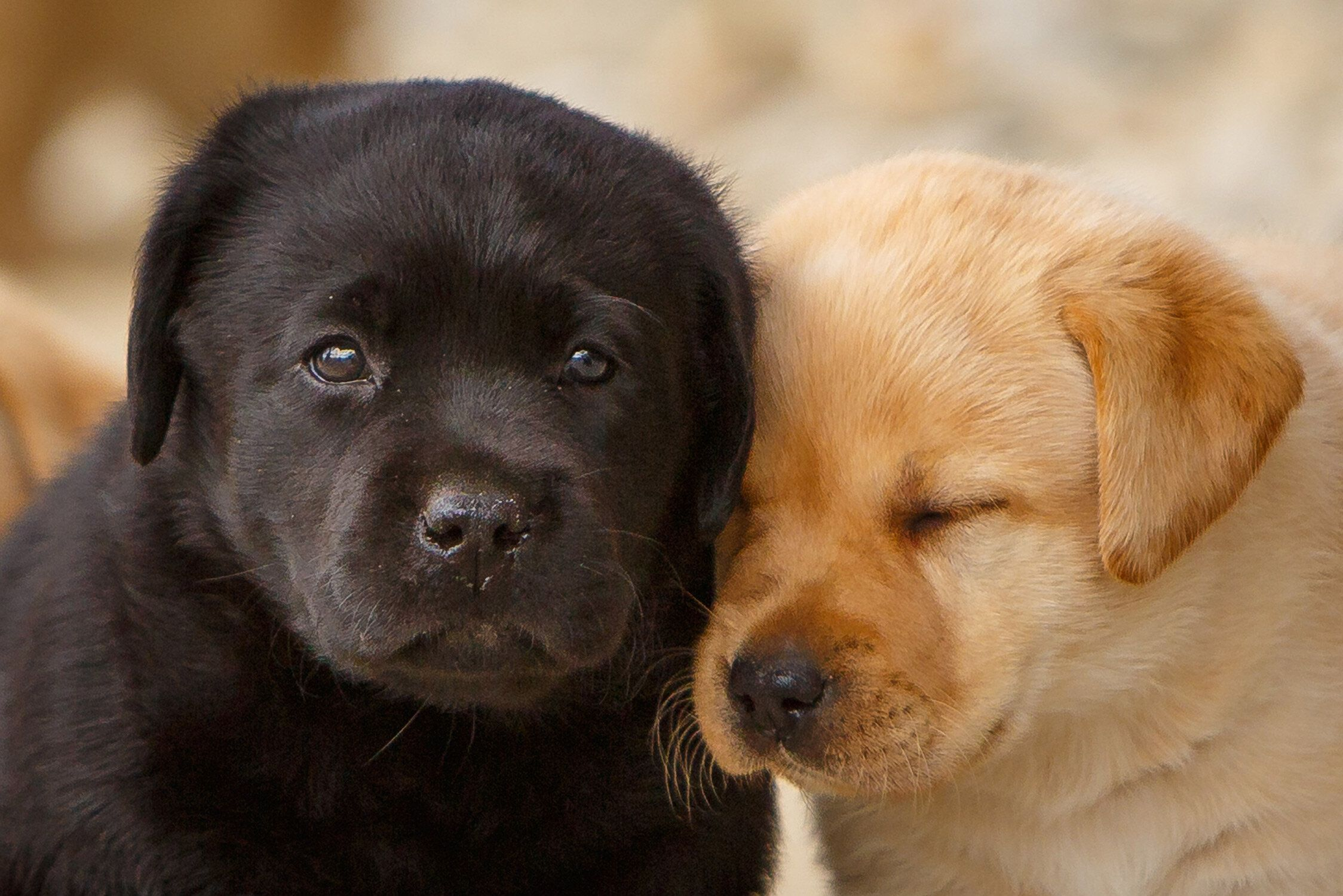 Daily dose march 21 2020 lean on me labrador