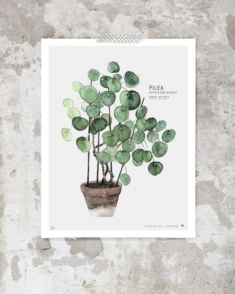 pilea peperomioides cardboard tubes dutch and watercolor. Black Bedroom Furniture Sets. Home Design Ideas