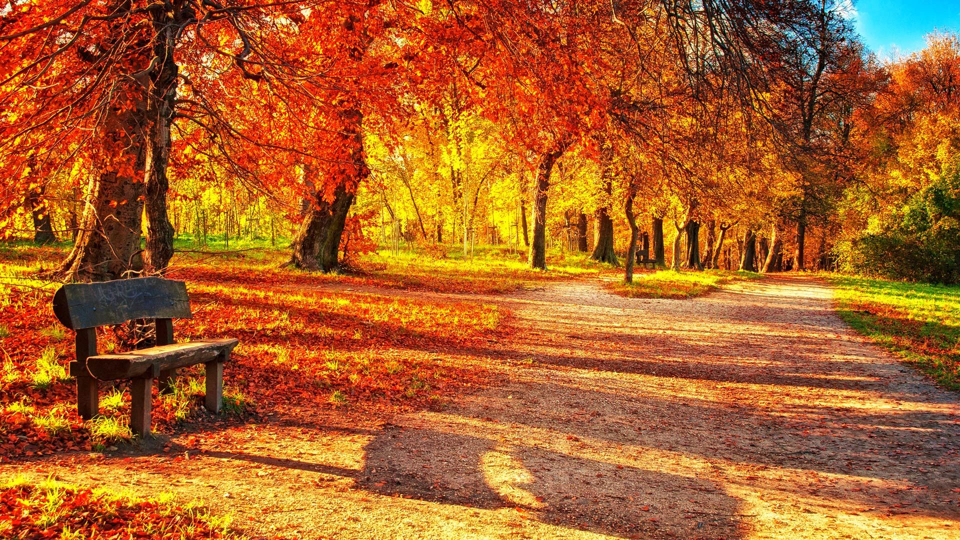sfondi desktop gratis autunno cute autumn leaves hd