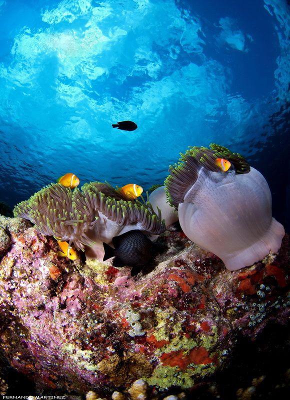 Maldives South
