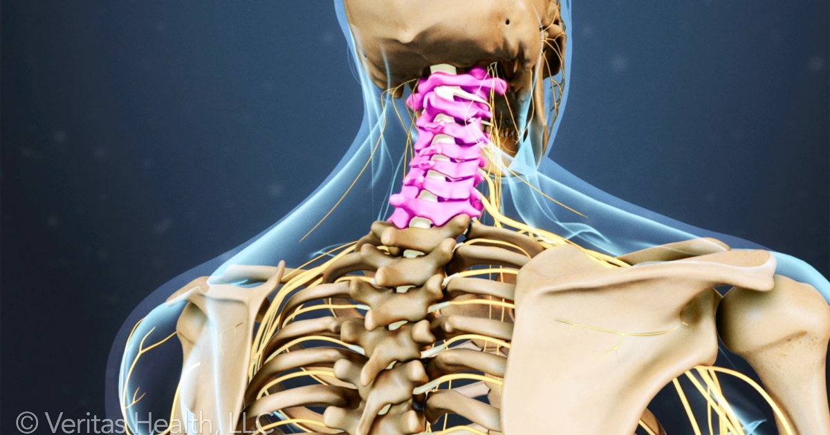 All About The C7 T1 Spinal Segment Cervicothoracic Junction