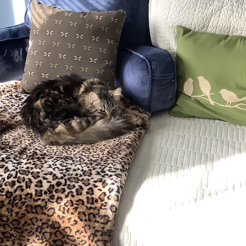 Pin By Rhea Desroches On Flynn Bean Bag Chair Throw Blanket Pillows