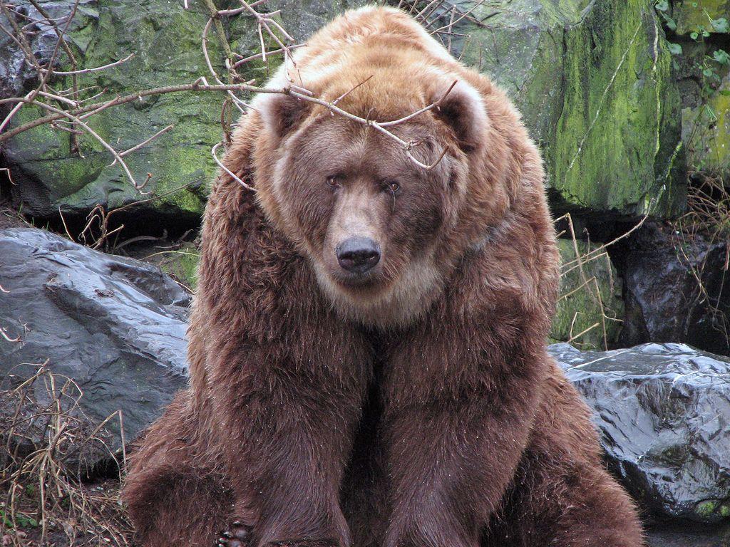 гризли медведь фото с человеком вот для таких