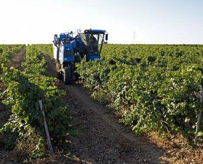Comienza la vendimia en las casi 13.000 hectareas de la Denominación de Origen de Rueda http://www.revcyl.com/www/index.php/economia/item/1273-comienza-la-vendimia-en-las-casi-13000-hectareas-de-la-denominaci%C3%B3n-de-origen-de-rueda
