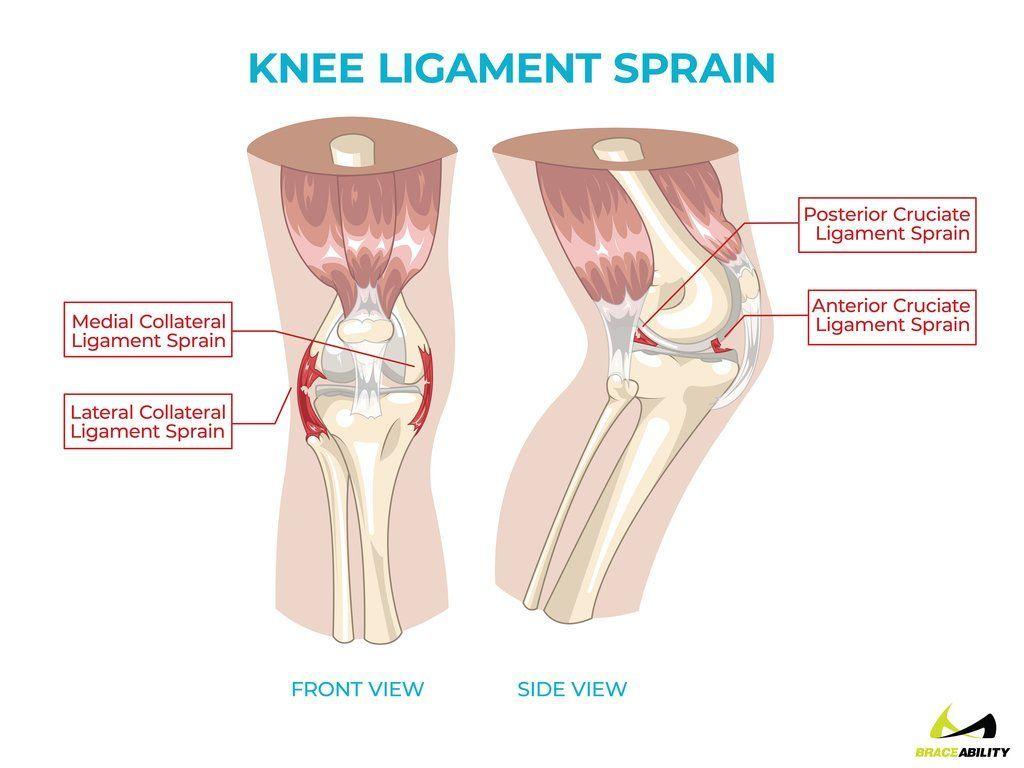Anatomy Of Knee Ligament Sprains Causing Back Of Knee Pain Knee