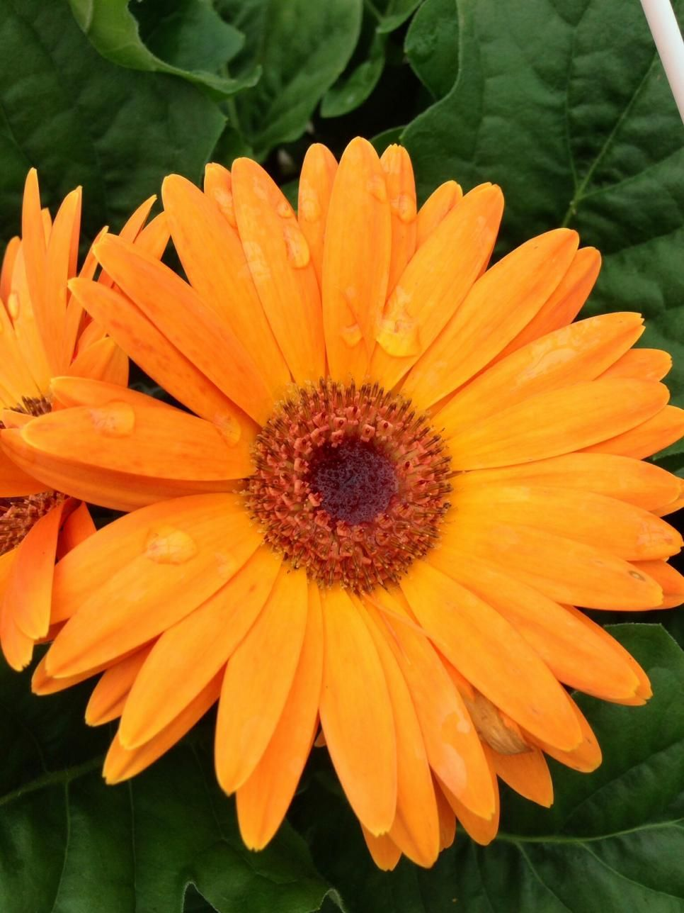 Top Orange Annual Flowers For Your Garden Garden Pinterest