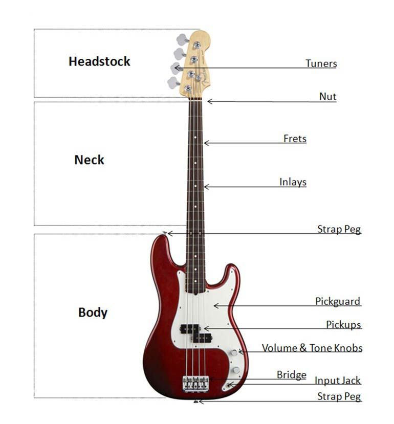 Anatomy of a P Bass | THE BASS | Pinterest | Bass, Anatomy and Drums