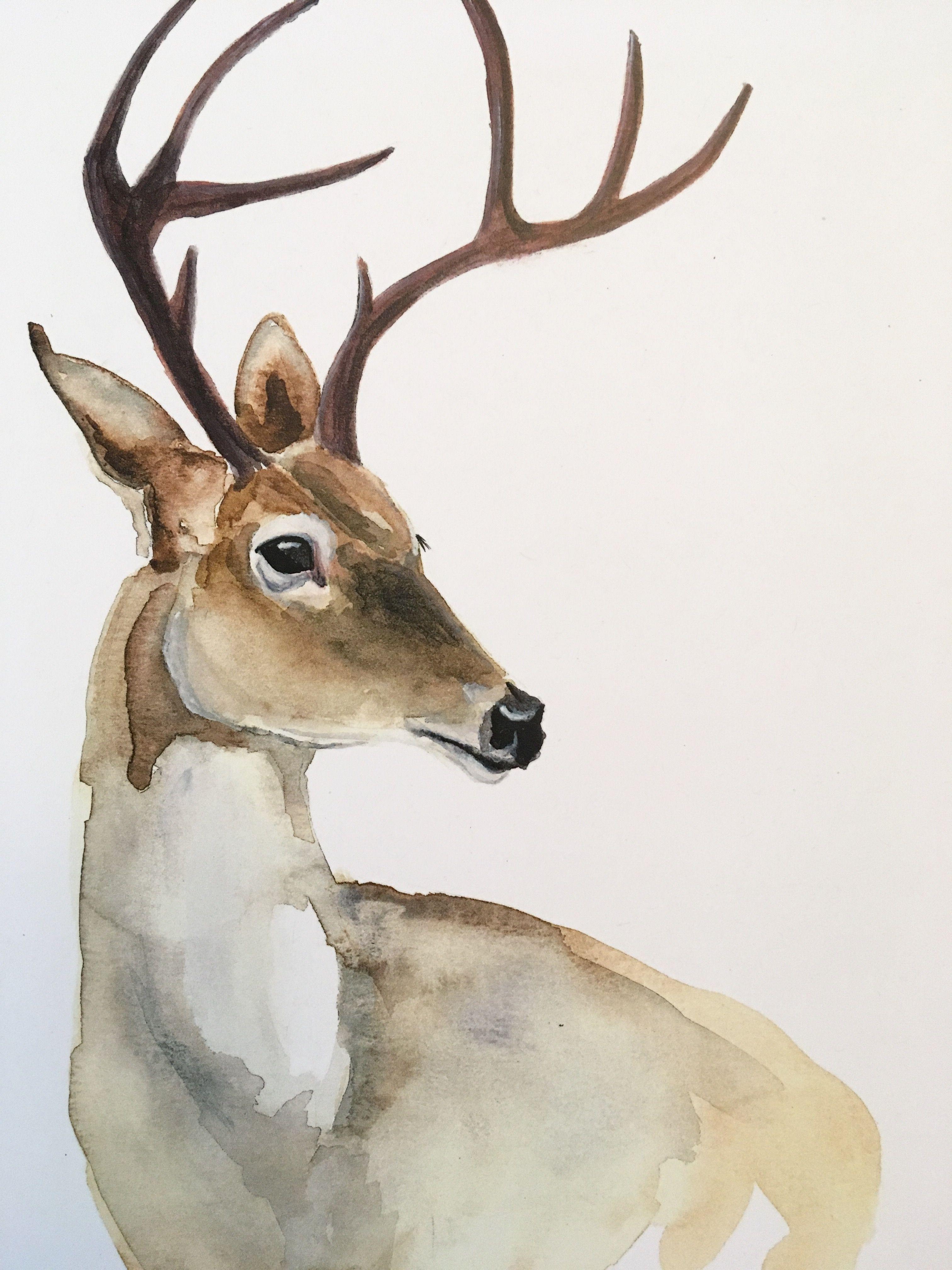 Картинки рисованные оленя