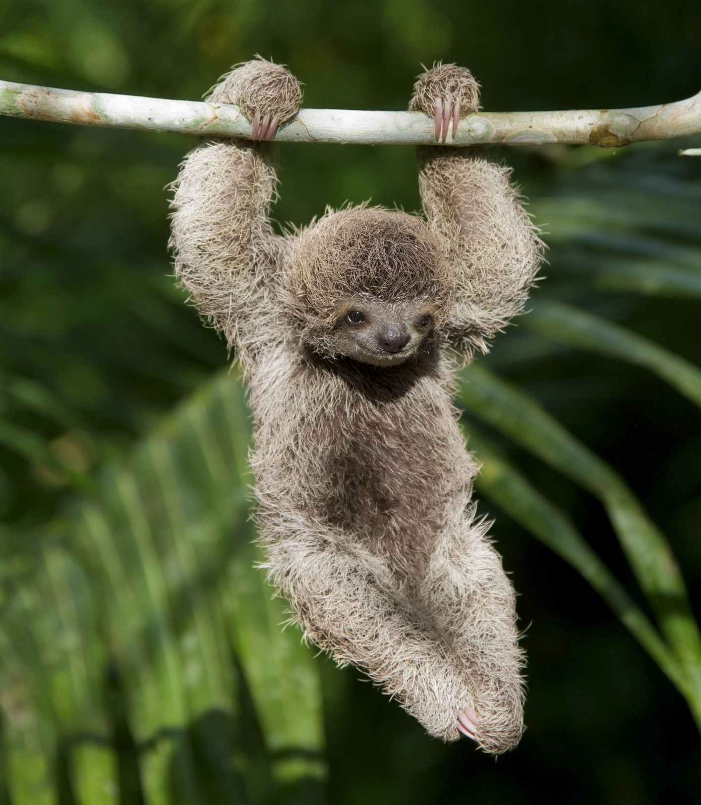 10 Fun Facts About Sloths