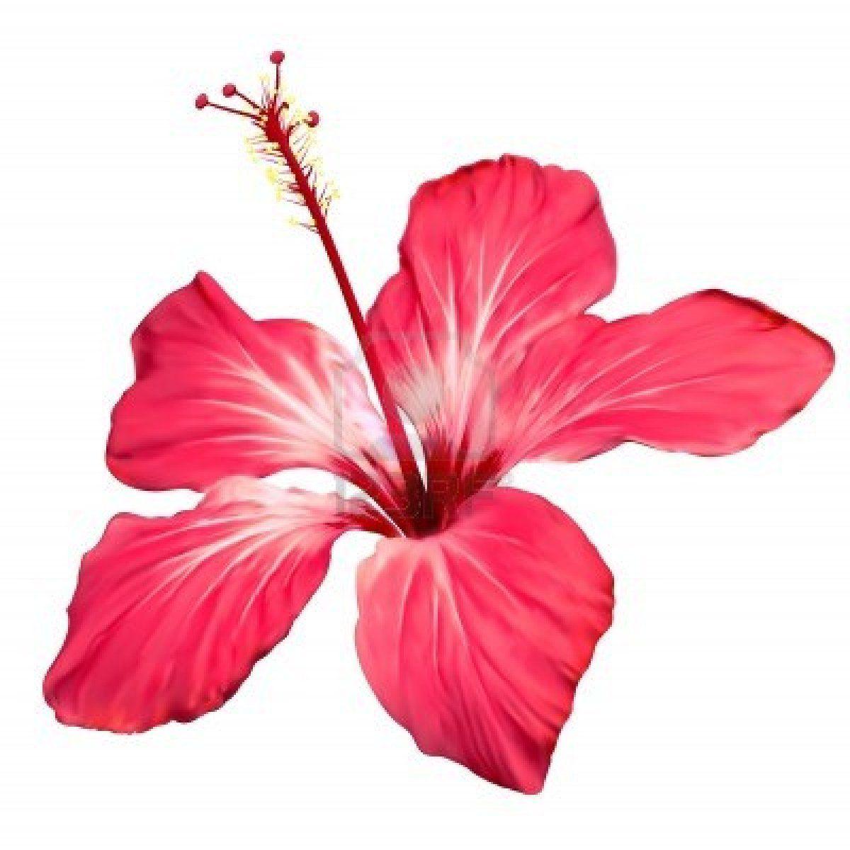 Hibiscus Flower Border Clip Art - ClipArt Best | Flowers ...