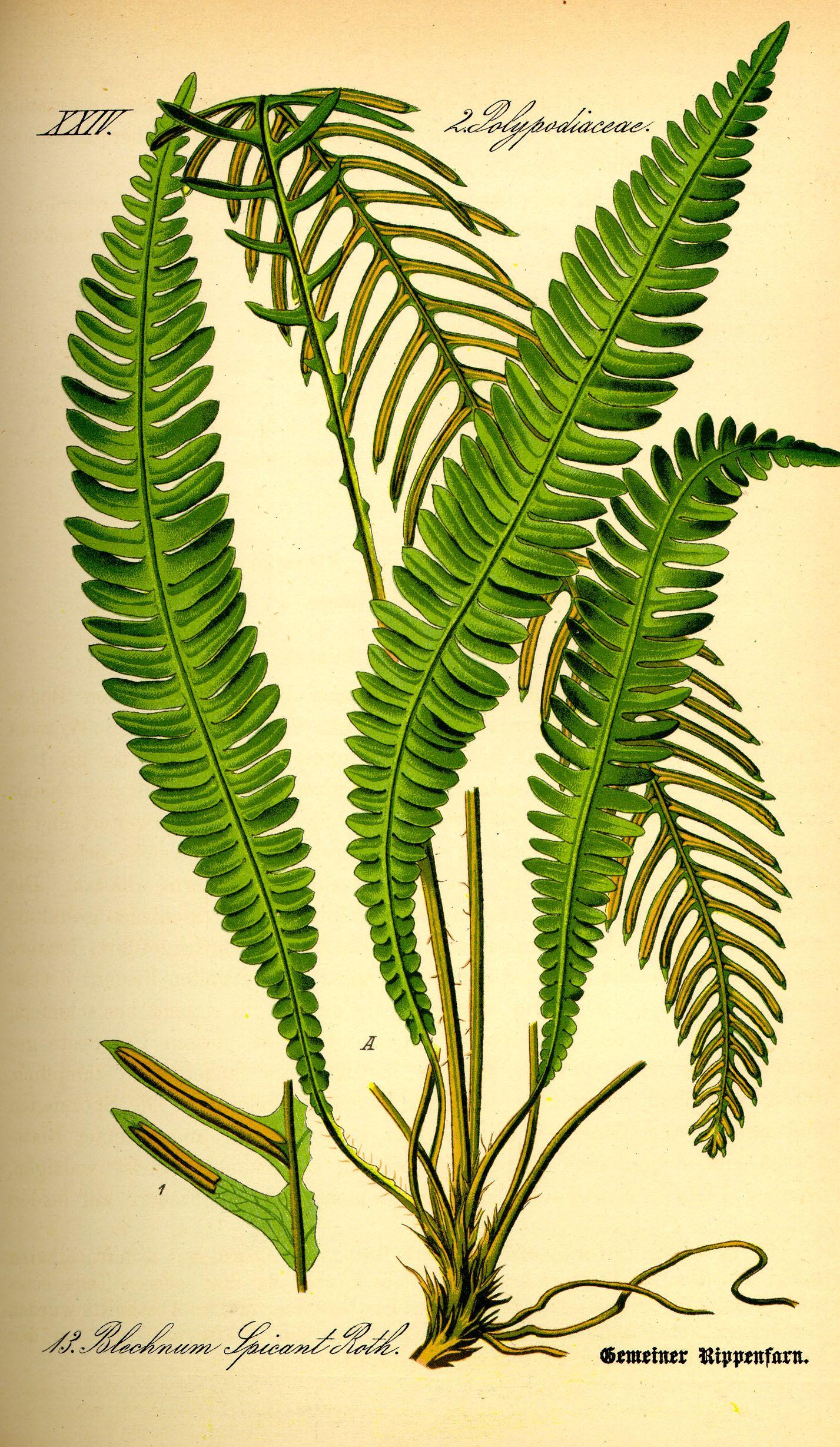 pin auf illustrations lovely botanicals