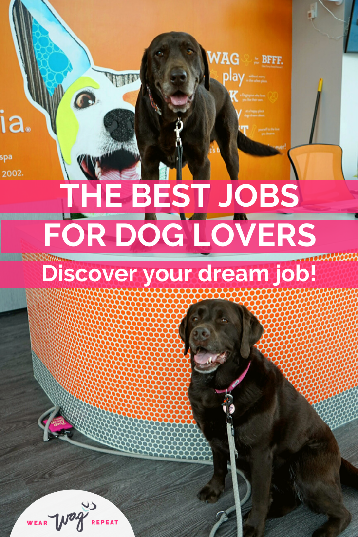 The Best Jobs For Dog Lovers Wear Wag Repeat In 2020 Dog Lovers Dogs Dog Friendly Vacation