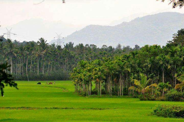 Nature At Its Best Holiday Destinations In India