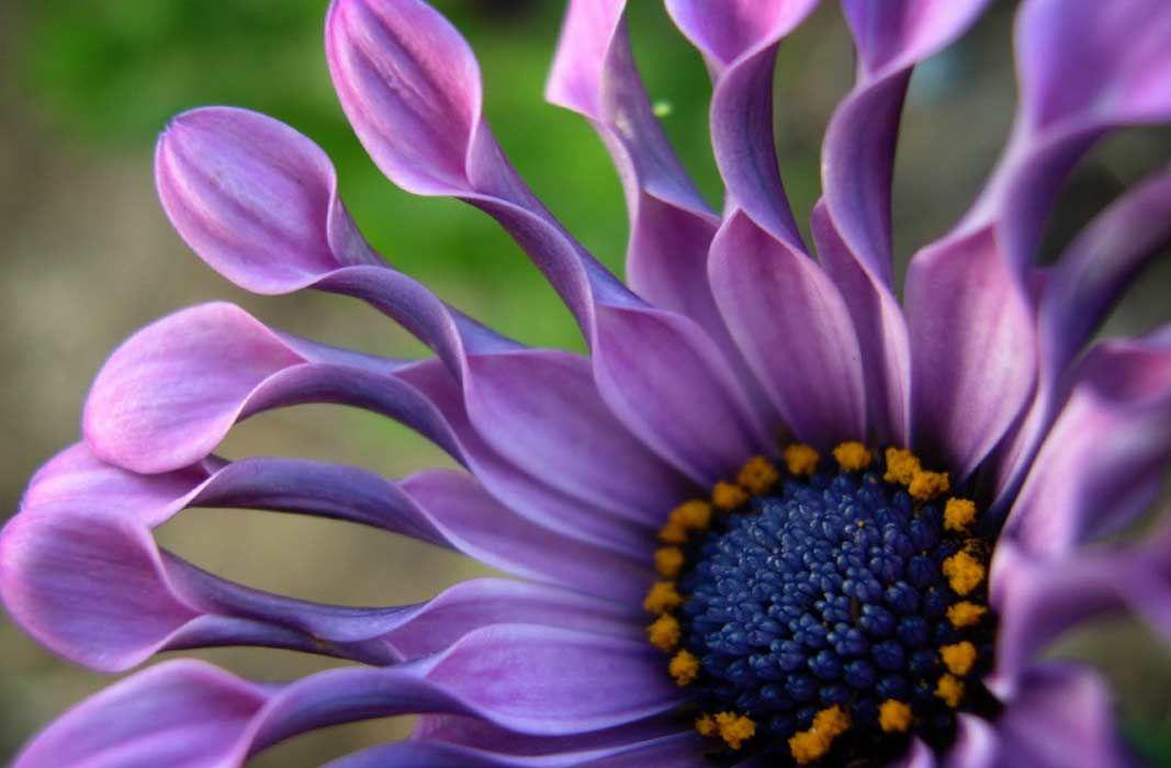 Dünyanın En çirkin çiçeği
